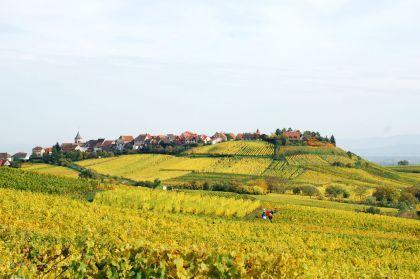 Elsaessische Weinstrasse Zellenberg