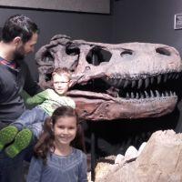 Ausflug In Die Welt Der Kristalle Tyrannosaurus Rex Schaedel
