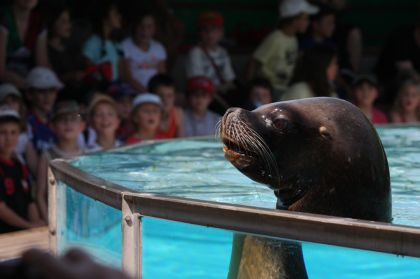 Familienurlaub Naturoparc Seehund