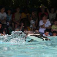 Naturoparc Natur  Und Tierpark Pinguin