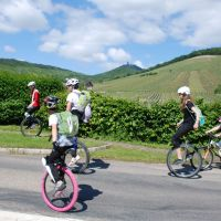 Mit Dem Fahrrad Unterwegs Einradfahrer Weinstrasse