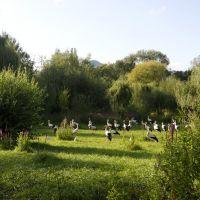 Familienurlaub Naturoparc Storch