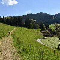 Guck A Mol Wegle Oberwolfach 4