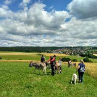 Esel Wanderung (5)
