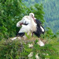 Typisch Schwarzwald Storch