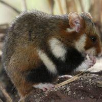 Naturoparc Natur  Und Tierpark Hamster