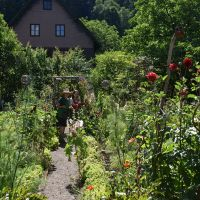Blumen Kraeuter Fotos Hoefenhof  Bauerngarten