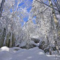 Wer ist der Held an diesem Wintertag? Furtwangen, Schnee - Wald