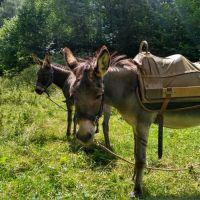 Esel Wanderung (7)