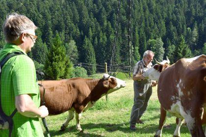 Schiltach, Stammelbach - Frieder, Kuehe und Wanderer