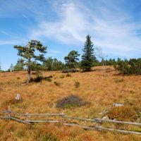 Schwarzwaldhochstrasse 1000meterweg Herbst Oktober