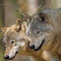 Familienurlaub Woelfe Alternativer Wolf Baerenpark